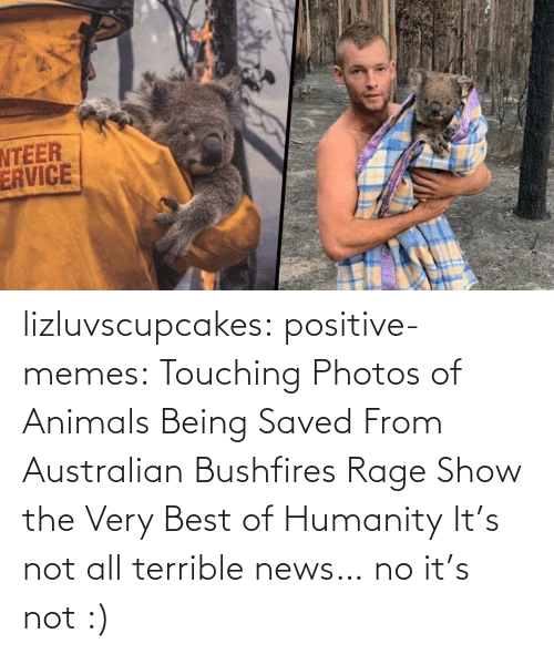 saved: lizluvscupcakes: positive-memes:  Touching Photos of Animals Being Saved From Australian Bushfires Rage Show the Very Best of Humanity   It's not all terrible news…  no it's not :)