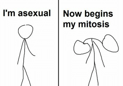mitosis: l'm asexualNow begins  my mitosis