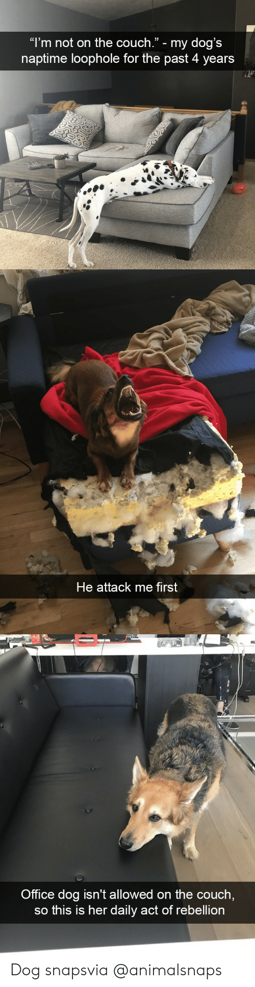 "Dogs, Target, and Tumblr: ""l'm not on the couch."" - my dog's  naptime loophole for the past 4 years   He attack me first   Office dog isn't allowed on the couch  so this is her daily act of rebellion Dog snapsvia @animalsnaps"