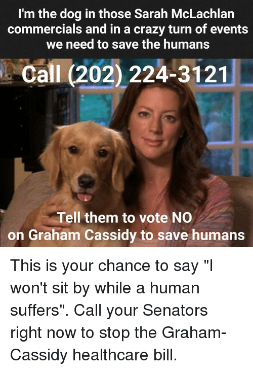 l m the dog in those sarah mclachlan commercials and in a crazy turn
