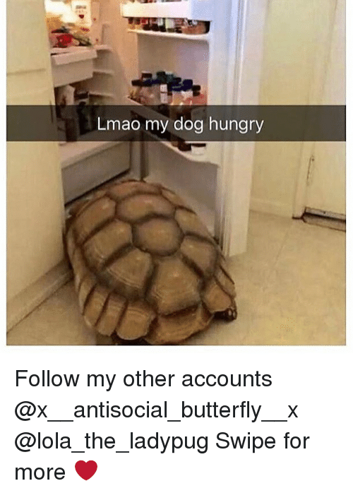 Hungryness: Lmao my dog hungry Follow my other accounts @x__antisocial_butterfly__x @lola_the_ladypug Swipe for more ❤️