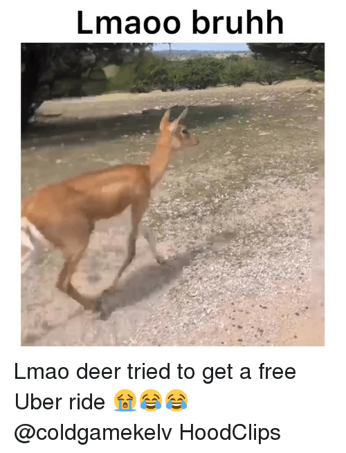 Bruhh: Lmaoo bruhh Lmao deer tried to get a free Uber ride 😭😂😂 @coldgamekelv HoodClips