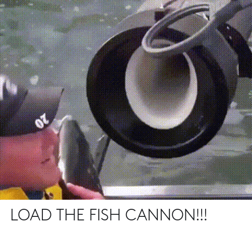 Fish, Cannon, and Load: LOAD THE FISH CANNON!!!