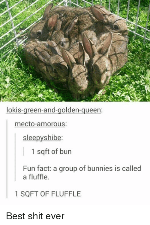 shibe: lokis-green-and-golden-queen:  mecto-amorous:  slee  shibe  1 sq ft of bun  Fun fact: a group of bunnies is called  a fluffle.  1 SQFT OF FLUFFLE Best shit ever
