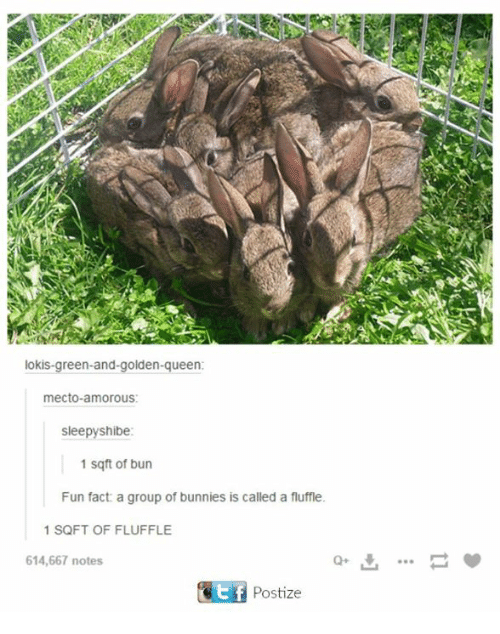 shibe: lokis green-and-golden-queen:  mecto amorous:  sleepy shibe:  1 sq ft of bun  Fun fact a group of bunnies is called a fluffle.  1 SQFT OF FLUFFLE  614,667 notes  Kit f  Postize