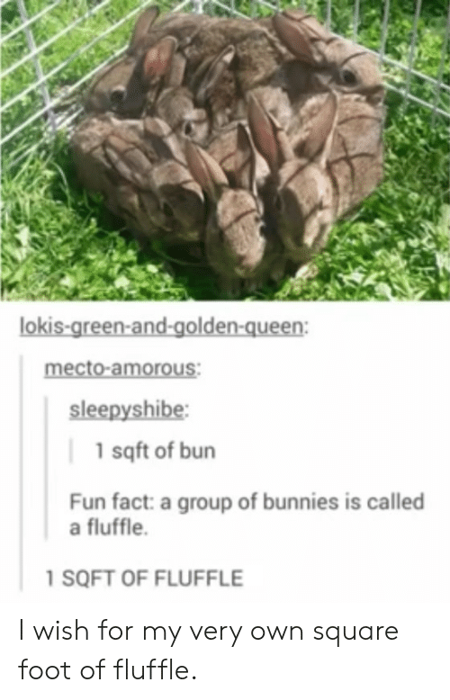 Bunnies: lokis-green-and-golden-queen:  mecto-amorous:  sleepyshibe  1 sqft of bun  Fun fact: a group of bunnies is called  a fluffle.  1 SQFT OF FLUFFLE I wish for my very own square foot of fluffle.