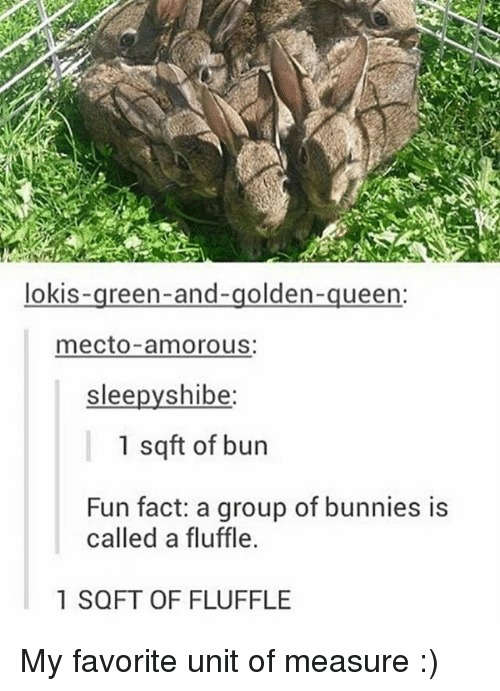 shibe: lokis  reen-and-golden  queen:  mecto amorous:  slee  shibe  1 sqft of bun  Fun fact: a group of bunnies is  called a fluffle.  1 SQFT OF FLUFFLE My favorite unit of measure :)