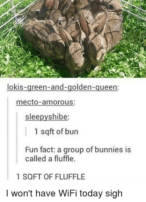 shibe: lokis  reen-and-golden  ueen  mecto amorous:  slee  shibe  1 sq ft of bun  Fun fact: a group of bunnies is  called a fluffle.  1 SQFT OF FLUFFLE I won't have WiFi today sigh