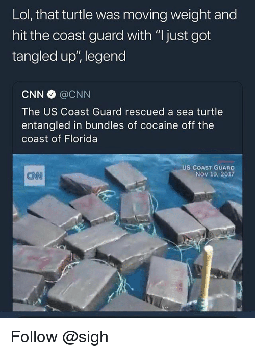 "cnn.com, Lol, and Cocaine: Lol, that turtle was moving weight and  hit the coast guard with ""I just got  tangled up', legend  CNN @CNN  The US Coast Guard rescued a sea turtle  entangled in bundles of cocaine off the  coast of Florida  US COAST GUARD  Nov 19, 2017  CAN Follow @sigh"