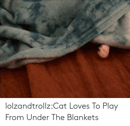 Tumblr, Blog, and Cat: lolzandtrollz:Cat Loves To Play From Under The Blankets