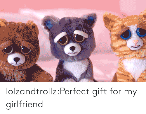 Animals, Tumblr, and Blog: lolzandtrollz:Perfect gift for my girlfriend