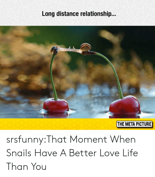 Distance Relationship: Long distance relationship..  THE META PICTURE srsfunny:That Moment When Snails Have A Better Love Life Than You