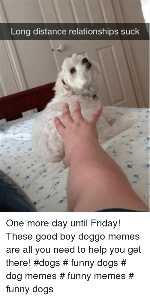Day Until: Long distance relationships suck  2s One more day until Friday! These good boy doggo memes are all you need to help you get there! #dogs # funny dogs # dog memes # funny memes # funny dogs