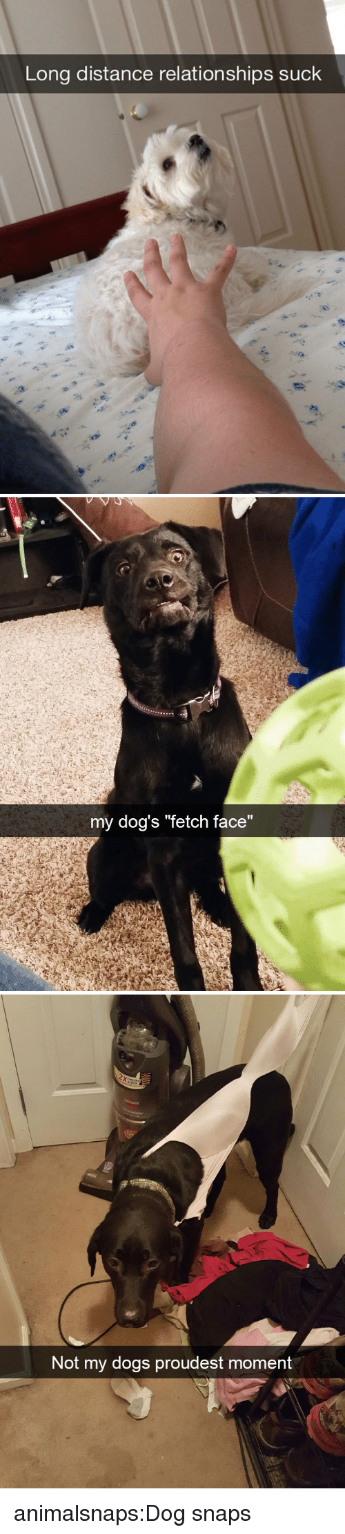 "fetch: Long distance relationships suck   my dog's ""fetch face""   Not my dogs proudest mom  ent animalsnaps:Dog snaps"