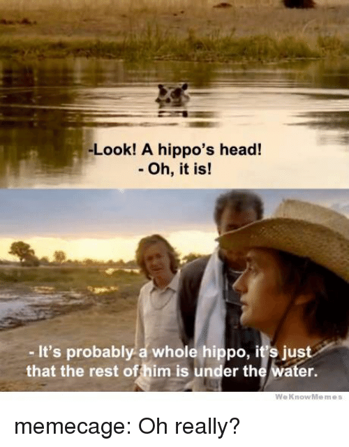Weknowmemes: -Look! A hippo's head!  - Oh, it is!  - It's probably a whole hippo, it's just  that the rest offhim is under the water.  WeKnowMemes memecage:  Oh really?