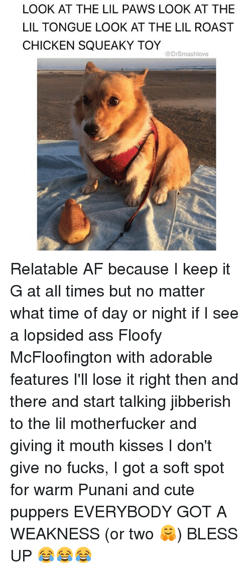 Roastes: LOOK AT THE LIL PAWS LOOK AT THE  LIL TONGUE LOOK AT THE LIL ROAST  CHICKEN SQUEAKY TOY  @Drsmashlove Relatable AF because I keep it G at all times but no matter what time of day or night if I see a lopsided ass Floofy McFloofington with adorable features I'll lose it right then and there and start talking jibberish to the lil motherfucker and giving it mouth kisses I don't give no fucks, I got a soft spot for warm Punani and cute puppers EVERYBODY GOT A WEAKNESS (or two 🤗) BLESS UP 😂😂😂