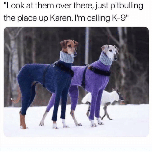 "k-9: |""Look  at them over there, just pitbulling  the place up Karen. I'm calling K-9"""