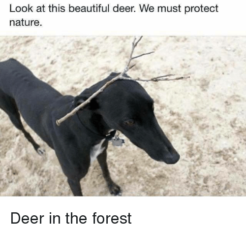 Beautiful, Deer, and Nature: Look at this beautiful deer. We must protect  nature. <p>Deer in the forest</p>