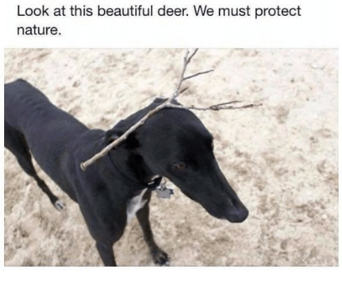 Beautiful, Deer, and Nature: Look at this beautiful deer. We must protect  nature