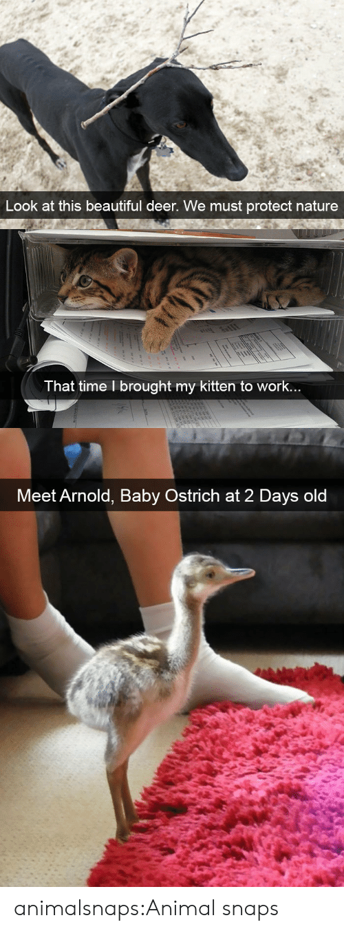 Beautiful, Deer, and Target: Look at this beautiful deer. We must protect nature   T hat time l brought my kitten to work..   Meet Arnold, Baby Ostrich at 2 Days old animalsnaps:Animal snaps