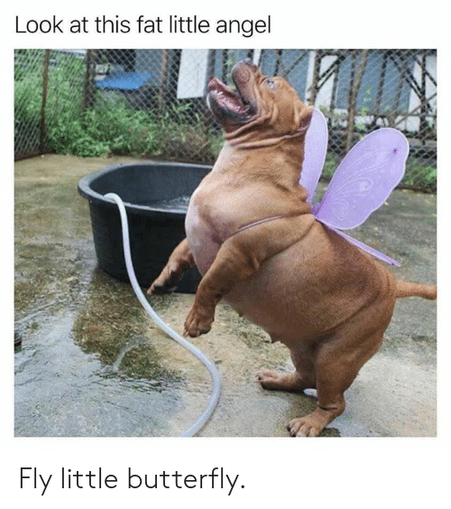 Butterfly: Look at this fat little angel Fly little butterfly.