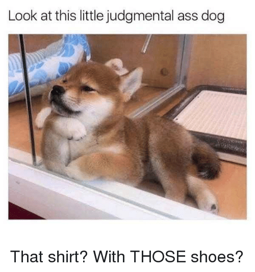 Ass, Dank, and Shoes: Look at this little judgmental ass dog That shirt? With THOSE shoes?