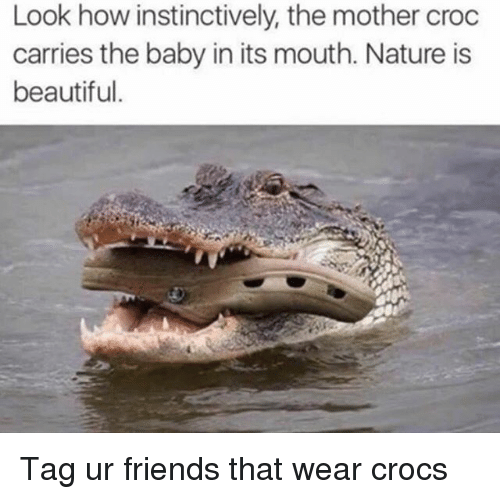 Nature Is Beautiful: Look how instinctively, the mother croc  carries the baby in its mouth. Nature is  beautiful. Tag ur friends that wear crocs