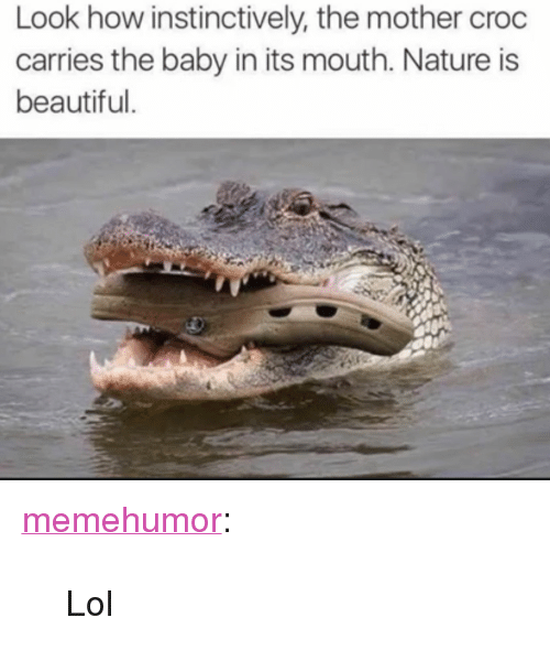"""Nature Is Beautiful: Look how instinctively, the mother croc  carries the baby in its mouth. Nature is  beautiful <p><a href=""""http://memehumor.net/post/164974852281/lol"""" class=""""tumblr_blog"""">memehumor</a>:</p>  <blockquote><p>Lol</p></blockquote>"""