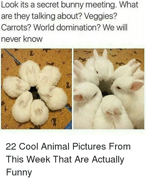 Funny, Animal, and Cool: Look its a secret bunny meeting. What  are they talking about? Veggies?  Carrots? World domination? We will  never know  12 22 Cool Animal Pictures From This Week That Are Actually Funny