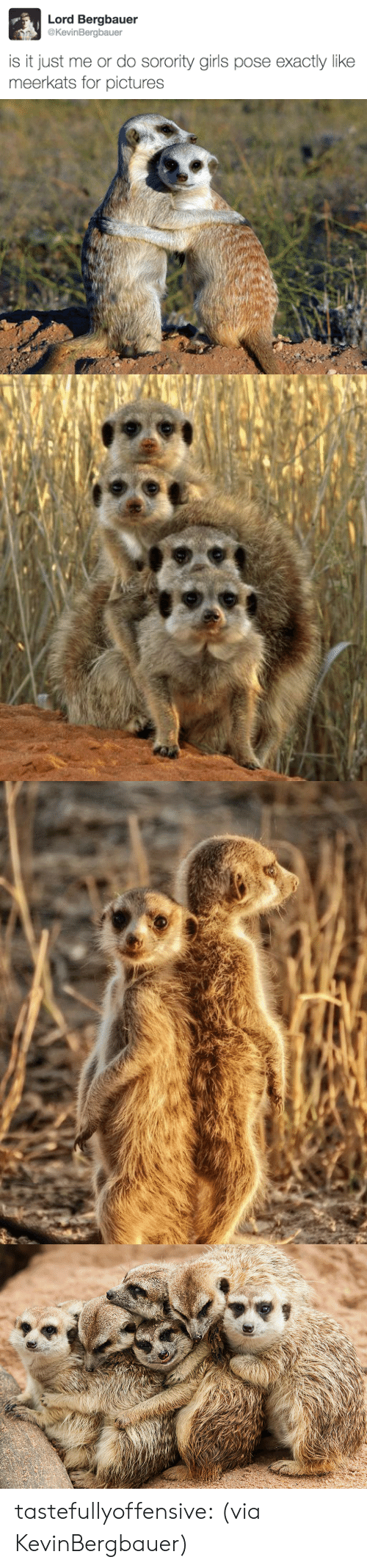 Girls, Target, and Tumblr: Lord Bergbauer  @KevinBergbauer  is it just me or do sorority girls pose exactly like  meerkats for pictures tastefullyoffensive:  (via KevinBergbauer)