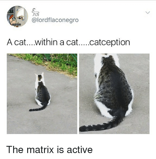 Catception: @lordflaconegro  A cat....within a cat....catception The matrix is active