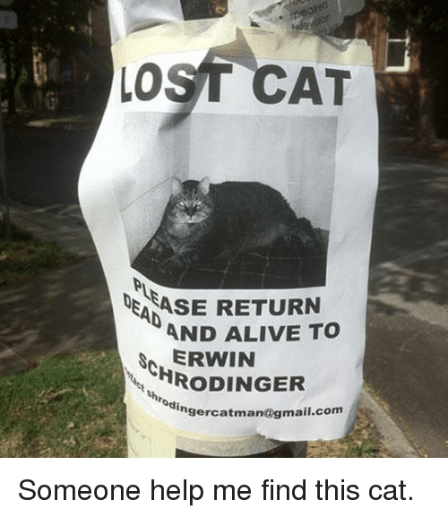 Lost Cat: LOST CAT  ASE RETURN  AND ALIVE TO  ERWIN  HRoDINGER  Nhrodinger  catman  @gmail.com Someone help me find this cat.