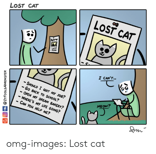 Lost Cat: LOST CAT  LOST CAT  I CANT  -SHOLD I QUIT MY JOB?  -Go BACK TO SCHOOL?  - OPEN MY DREAM BAKERY?  - WHERE'S MY LIFE GOING?  CAN You HELP ME?  MEOW? omg-images:  Lost cat