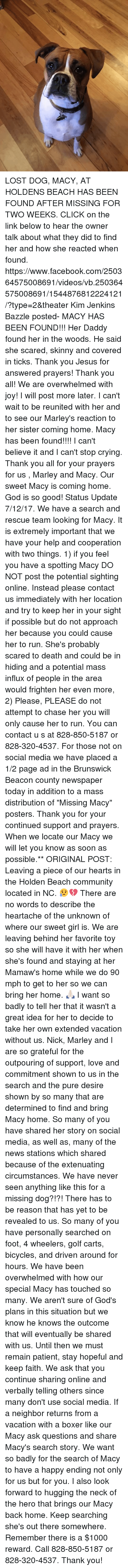 """answered prayers: LOST DOG, MACY, AT HOLDENS BEACH HAS BEEN FOUND AFTER MISSING FOR TWO WEEKS.   CLICK on the link below to hear the owner talk about what they did to find her and how she reacted when found.     https://www.facebook.com/250364575008691/videos/vb.250364575008691/1544876812224121/?type=2&theater   Kim Jenkins Bazzle posted- MACY HAS BEEN FOUND!!! Her Daddy found her in the woods. He said she scared, skinny and covered in ticks. Thank you Jesus for answered prayers! Thank you all! We are overwhelmed with joy! I will post more later. I can't wait to be reunited with her and to see our Marley's reaction to her sister coming home. Macy has been found!!!! I can't believe it and I can't stop crying. Thank you all for your prayers for us , Marley and Macy. Our sweet Macy is coming home. God is so good!  Status Update 7/12/17. We have a search and rescue team looking for Macy. It is extremely important that we have your help and cooperation with two things. 1) if you feel you have a spotting Macy DO NOT post the potential sighting online. Instead please contact us immediately with her location and try to keep her in your sight if possible but do not approach her because you could cause her to run. She's probably scared to death and could be in hiding and a potential mass influx of people in the area would frighten her even more, 2) Please, PLEASE do not attempt to chase her you will only cause her to run. You can contact u s at 828-850-5187 or 828-320-4537.  For those not on social media we have placed a 1/2 page ad in the Brunswick Beacon county newspaper today in addition to a mass distribution of """"Missing Macy"""" posters. Thank you for your continued support and prayers. When we locate our Macy we will let you know as soon as possible.**  ORIGINAL POST: Leaving a piece of our hearts in the Holden Beach community located in NC. 😥💔  There are no words to describe the heartache of the unknown of where our sweet girl is. We are leaving behind her favorite toy so"""