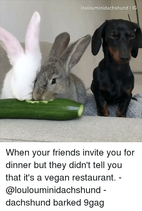 dachshund: loulouminidachshund IG When your friends invite you for dinner but they didn't tell you that it's a vegan restaurant. - @loulouminidachshund - dachshund barked 9gag