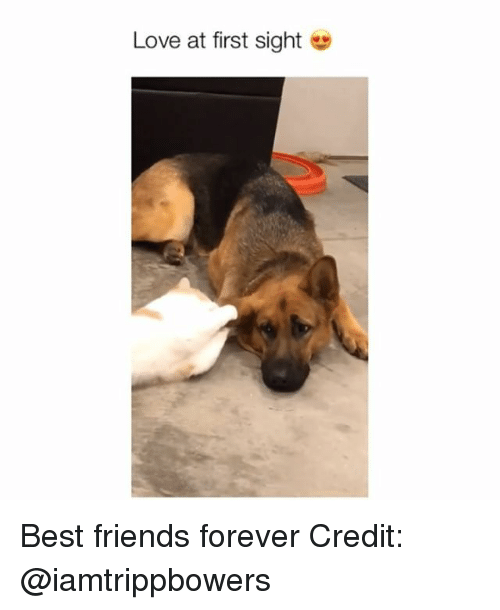love at first sight: Love at first sight Best friends forever Credit: @iamtrippbowers