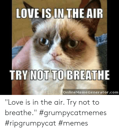 """Try Not: LOVE IS IN THE AIR  TRY NOT TO BREATHE  OnlineMeme Generator.com """"Love is in the air. Try not to breathe.""""  #grumpycatmemes #ripgrumpycat #memes"""