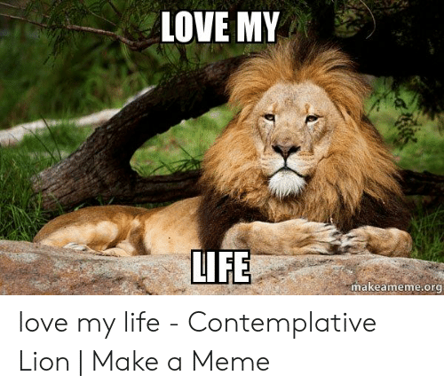 Love Of My Life Meme: LOVE MY  IFE  makeameme.org love my life - Contemplative Lion | Make a Meme