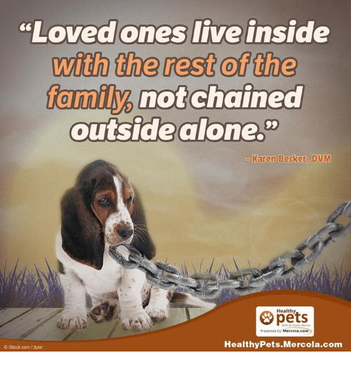 "dvm: ""Loved ones live inside  with the rest of the  family not chained  outside alone.""  Karen Becker, DVM  Healthy  Presented by Mercola.com  Healthy Pets.Mercola.com  iStock com tjyler"