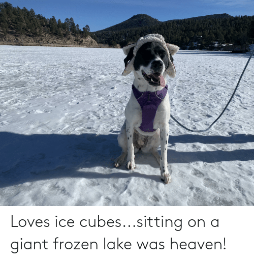 Ice Cubes: Loves ice cubes...sitting on a giant frozen lake was heaven!