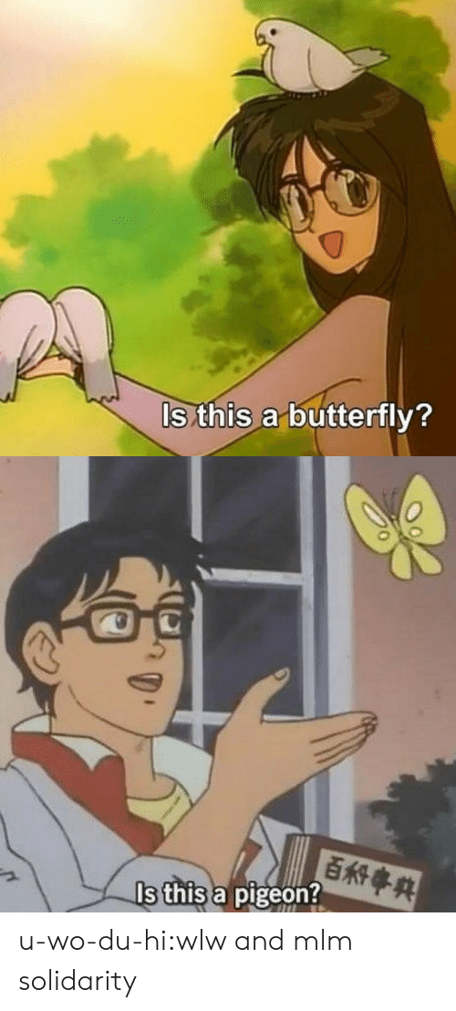 Butterfly: ls this a butterfly?   百科事典  Is this a pigeon? u-wo-du-hi:wlw and mlm solidarity