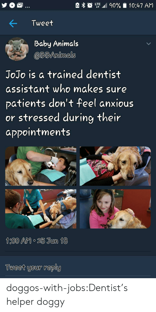 Animals, Tumblr, and Blog: LTE.al 90%  10:47 AM  Tweet  Baby Animals  @RBAnimals  JoJo is a trained dentist  assistant who makes sure  patients don't feel anxious  or stressed during their  aקקointments  Tueet your reply doggos-with-jobs:Dentist's helper doggy
