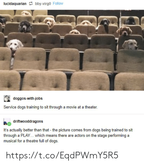 Virgo: lucidaquarian bby-virgo Follow  doggos-with-jobs  Service dogs training to sit through a movie at a theater.  driftwooddragons  It's actually better than that - the picture comes from dogs being trained to sit  through a PLAY... which means there are actors on the stage performing a  musical for a theatre full of dogs https://t.co/EqdPWmY5R5