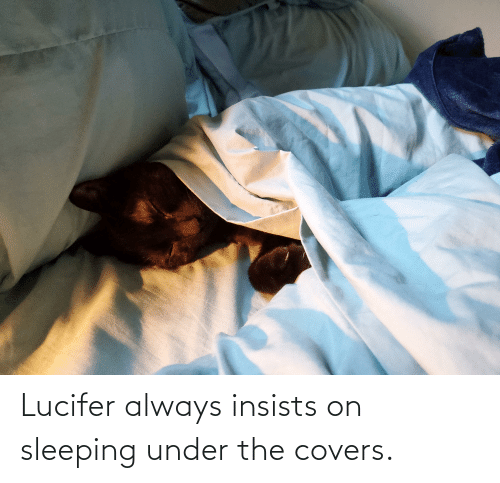 Lucifer: Lucifer always insists on sleeping under the covers.