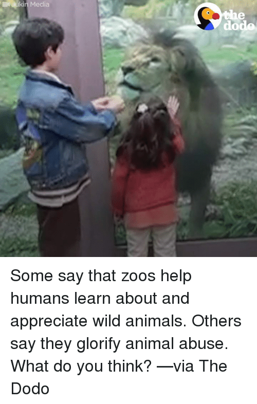 Animal Abuse: lukin Media  dodo Some say that zoos help humans learn about and appreciate wild animals. Others say they glorify animal abuse.  What do you think? —via The Dodo