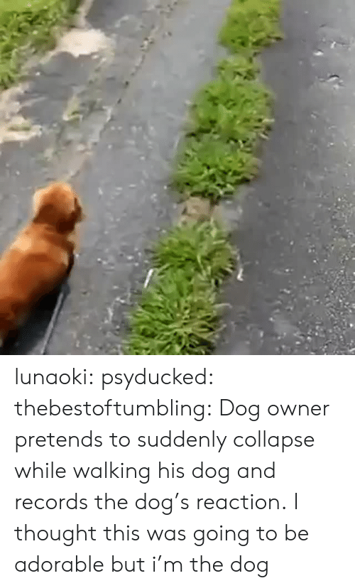 Dog Owner: lunaoki: psyducked:  thebestoftumbling:    Dog owner pretends to suddenly collapse while walking his dog and records the dog's reaction.    I thought this was going to be adorable but  i'm the dog