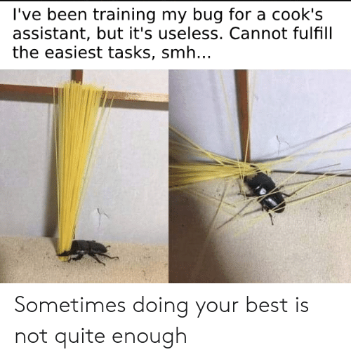 not quite: l've been training my bug for a cook's  assistant, but it's useless. Cannot fulfill  the easiest tasks, smh.. Sometimes doing your best is not quite enough