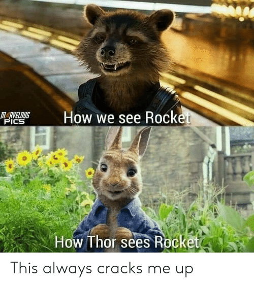 Thor, How, and Pics: M  How we see Rocket  HARVELDUS  PICS  How Thor sees Rocketo This always cracks me up