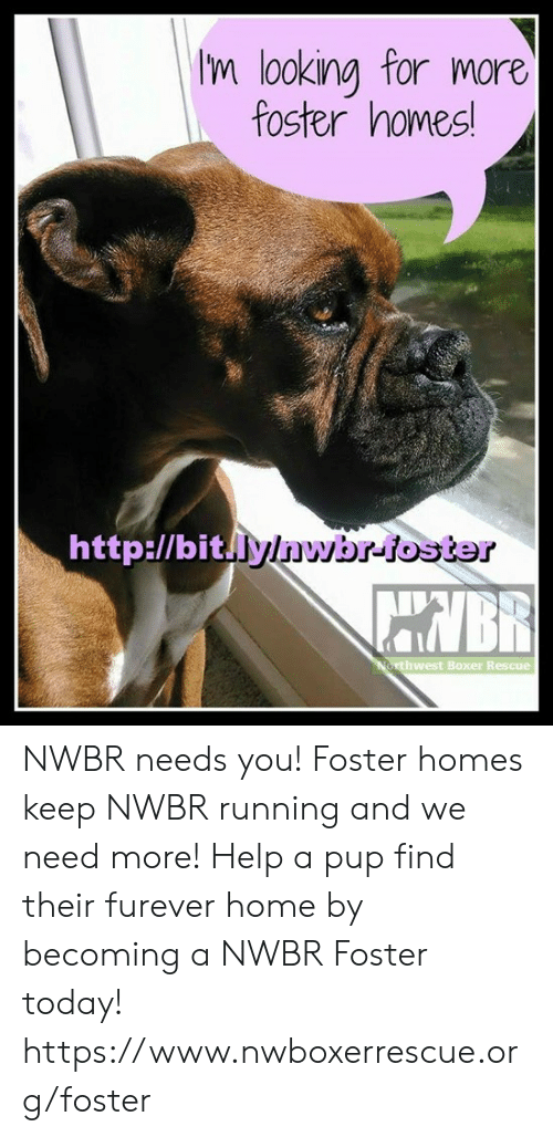 Memes, Boxer, and Help: m looking for more  foster homes  http:l/bitly/nwbr-foster  AUAIBR  west Boxer Rescue NWBR needs you! Foster homes keep NWBR running and we need more! Help a pup find their furever home by becoming a NWBR Foster today!   https://www.nwboxerrescue.org/foster