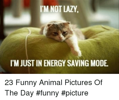 funny picture: M NOT LAZY  I'M JUST IN ENERGY SAVING MODE 23 Funny Animal Pictures Of The Day #funny #picture